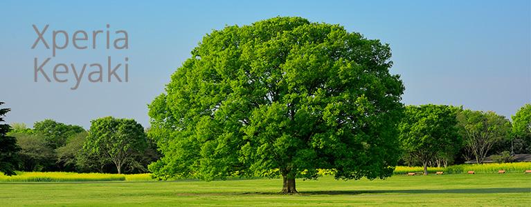 次世代Xperiaのコードネームが判明、木の名前シリーズに